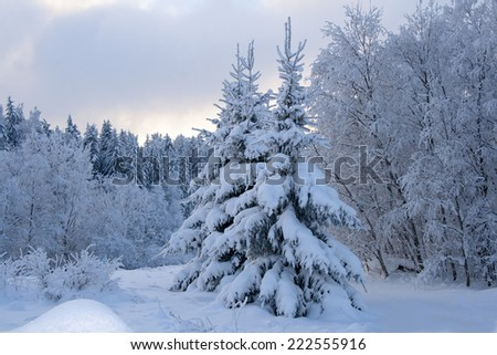 Winter landscape. wood is covered with snow - stock photo