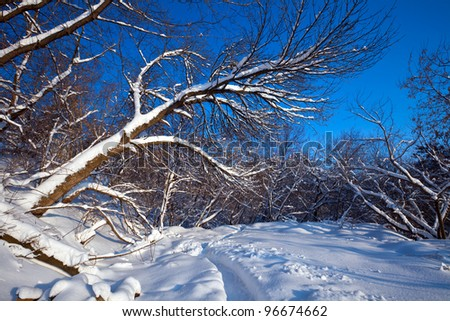 Winter lanscape with trees in sunny day - stock photo