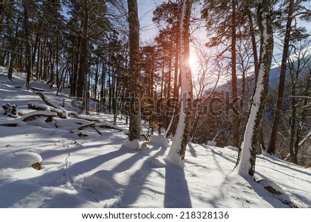 Winter misty landscape with mountains and forest.