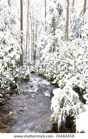 Winter, Monongahela National Forest, West Virginia, USA - stock photo