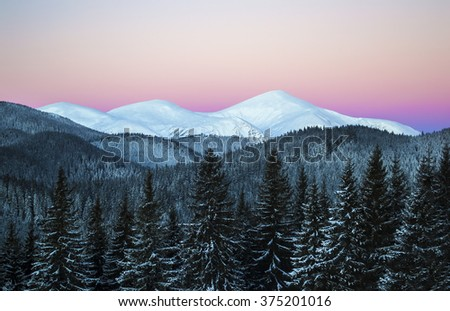 Winter morning scene of three snowy mountain peaks. Dark spruce forest in snow. Dawn. Clear sky. Ukraine. Carpathians - stock photo