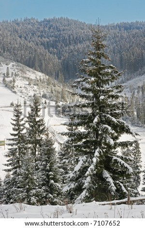 winter mountain landscape with big firs on a forefront