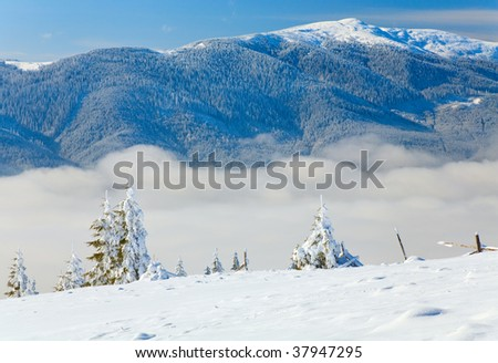 winter mountain landscape with rime and snow covered spruce trees  and some wood ruins (view from Bukovel ski resort (Ukraine) to Svydovets ridge)