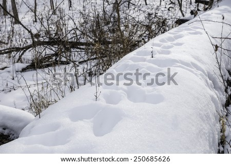 Winter mystery: Tracks of unidentified wild animal in deep snow along fallen tree trunk in woods, northern Illinois - stock photo