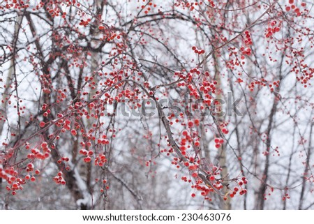 winter nature background of frozen snowy red berries on tree - stock photo