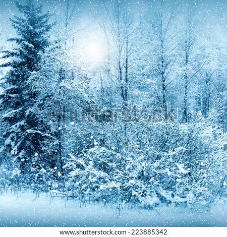 Winter nature, snowstorm in a forest - stock photo