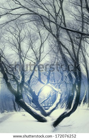 winter night in the park. - stock photo