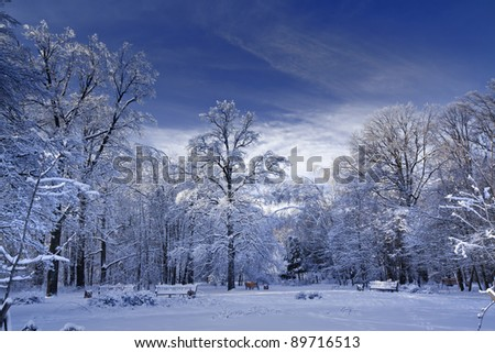 Winter panorama of a park at sunny day - stock photo