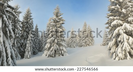 Winter panorama. Snow-covered trees in forest