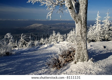 Winter path with frozen tree and beautiful lookout (north Bohemia). - stock photo