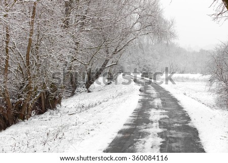 Winter path with frozen trees
