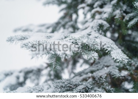 winter photo of blue fir covered with fresh snow, closeup photo
