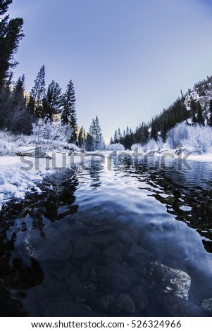 Winter Pine Landscape with River