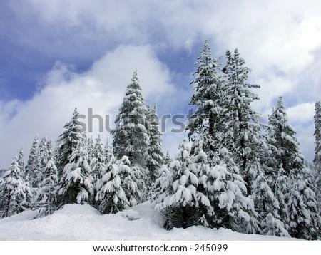 Winter Pines, Lake Tahoe, Northern California - stock photo