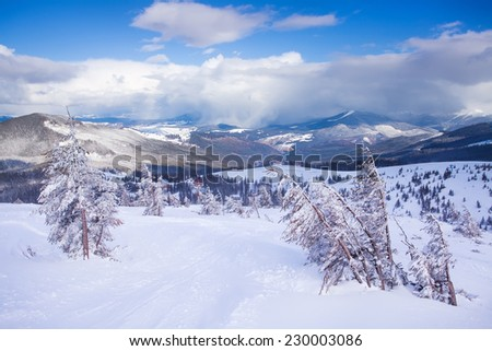Winter rime and snow covered fir Christmas trees on mountainside - stock photo