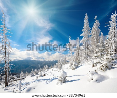 winter rime and snow covered fir trees on mountainside (Carpathian Mountains, Ukraine) and sunshine in sky