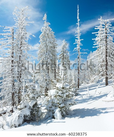 Winter rime and snow covered fir trees on mountainside (Carpathian Mountains, Ukraine). Two shots stitch image. - stock photo