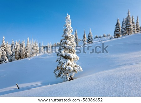 winter rime and snow covered fir trees on mountainside on blue sky background - stock photo