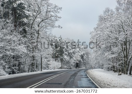 Winter road lined with trees in Poland - stock photo