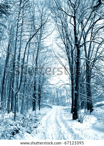 Winter road to wood. The trees covered with snow - stock photo