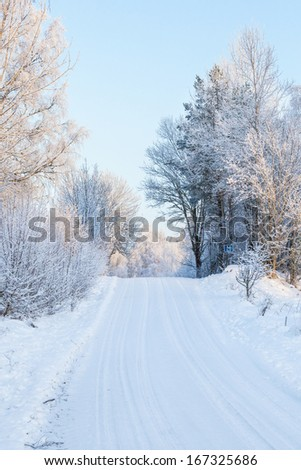 Winter road with snow through the woods