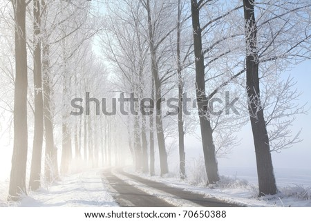 Winter rural road among frosted trees illuminated by the morning sun. - stock photo