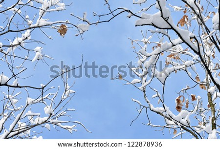 Winter scene in forest - stock photo