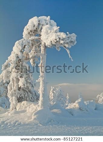 Winter scene in Lapland, Finland - stock photo
