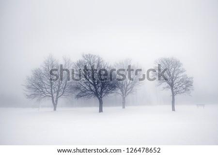 Winter scene of leafless trees in fog - stock photo