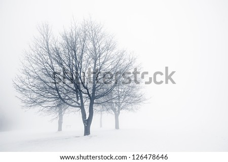 Winter scene of leafless trees in fog with copy space