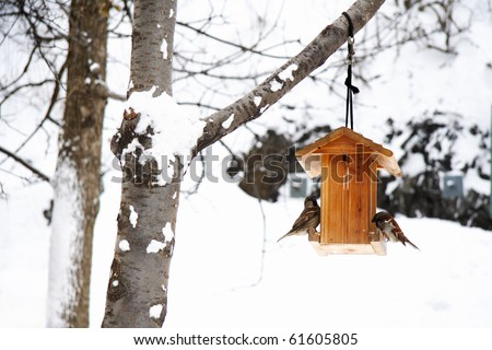 Winter scene with snow and birds. Peaceful and tranquil snowy winter photo of House sparrows in birdhouse. - stock photo