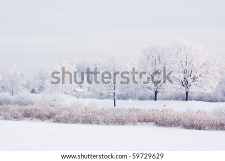 Winter scene with snowy trees and roofs - stock photo