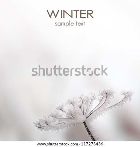 Winter scenery - close up of frozen plant - stock photo