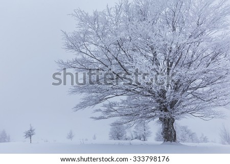 Winter scenery in the mountains with fresh powder snow - stock photo