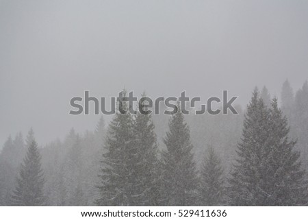 Winter scenery with fir trees in snow blizzard