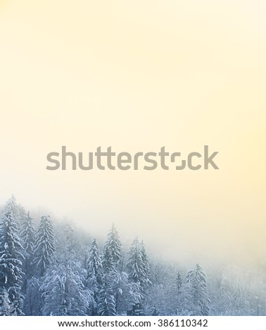 Winter scenery with snow covered coniferous forest and foggy, sunlit grey sky. Clean, natural environment, sustainable agriculture, serenity concept and background, wallpaper. 