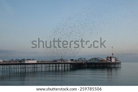 Winter seasonal spectacle of Starling Murmuration over Brighton Pier at sunset. - stock photo