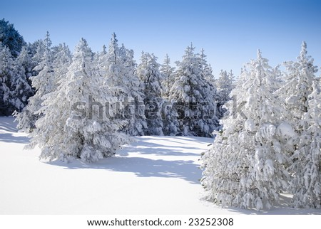 Winter Series 5 - Firs covered with snow - stock photo