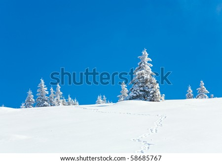 winter snow covered fir trees on mountainside on blue sky background (Carpathians, Ukraine) - stock photo