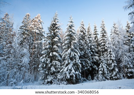 Winter snow covered forest in finland at dusk - stock photo