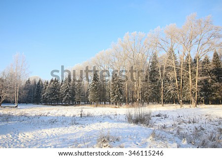 Winter snow park forest