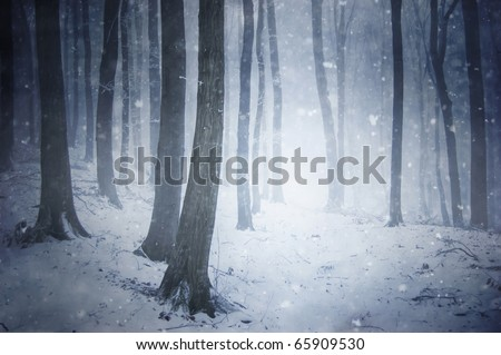 winter snow storm in a forest with wind blowing the snowflakes through the trees - stock photo