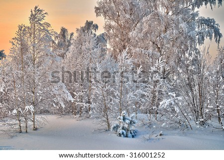 Winter snowy forest at sunset. One little Christmas tree stands in a clearing among the big trees.  - stock photo