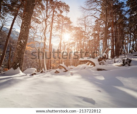 Winter sunny and frosty day is in mountains with woods - stock photo