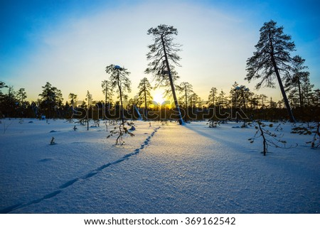 Winter sunset, animal footprints in the snow. - stock photo