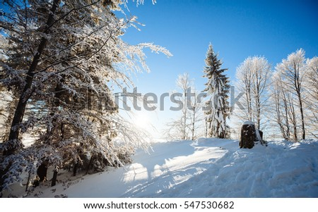 Winter sunset snow in the forest on top of mountain landscape