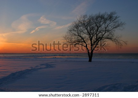 Winter sunset with silhouette of leaf-less tree - stock photo