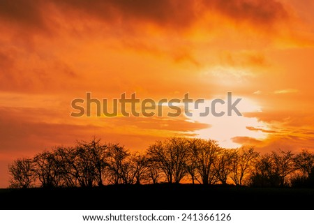 Winter sunset with tree silhouettes - stock photo