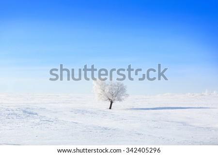 Winter tree. Alone frozen tree in winter snowy field. Frosty winter day - snowy branch. - stock photo
