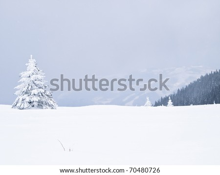 Winter tree boron / mountain Kopaonik Serbia / landscape - stock photo